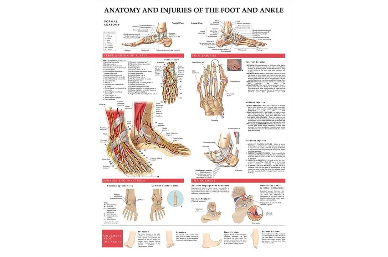 Zranenia nohy a členku 50,8x66cm