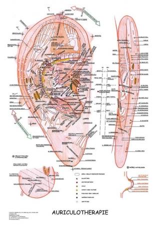 Aurikuloterapia 47x63cm