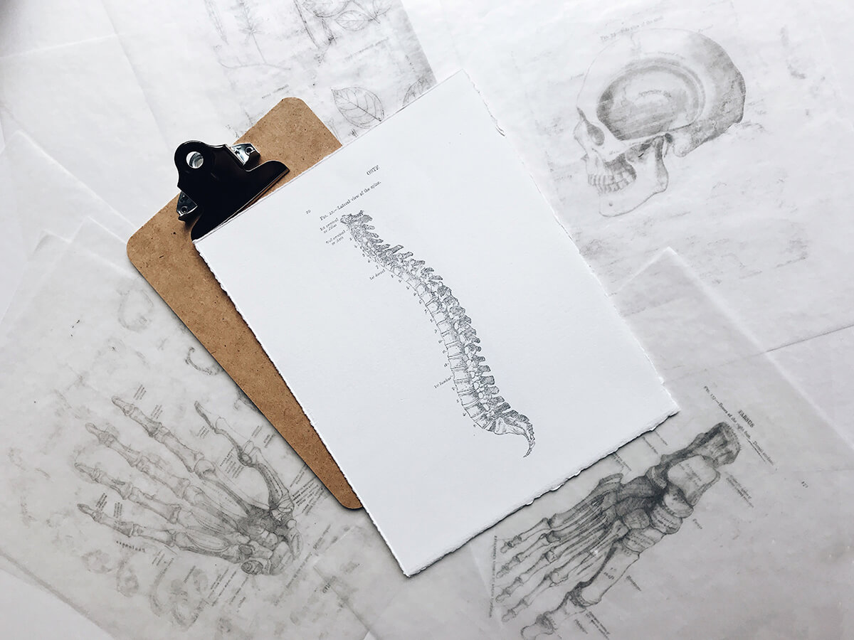 Nákres chrbtica - fyziologické zakrivenia